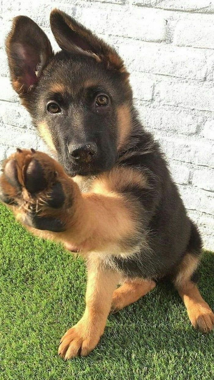 Cute dog giving you its paw - adorable animals to