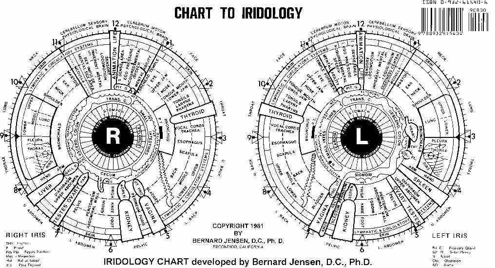 Dr bernard jensen iridology chart also rh pinterest