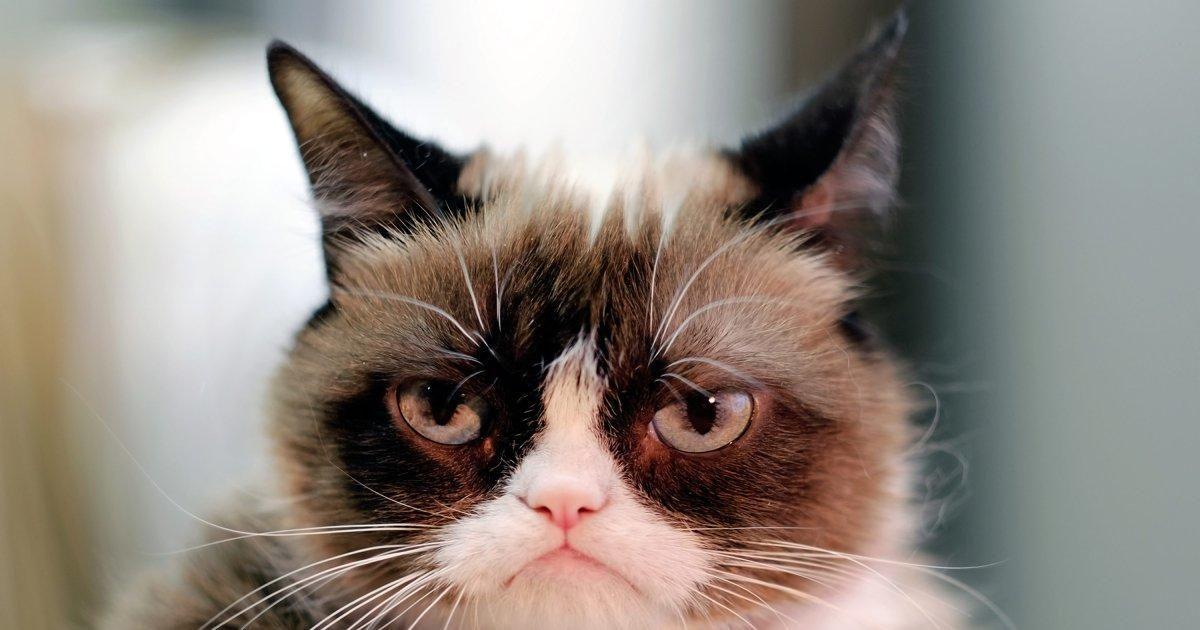 The cat's out of the bag. Grumpy cat has met her feline foe.