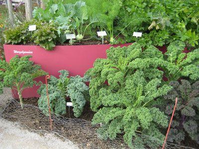 Gartenplanung beispiele  gartenplanung beispiele - Google-Suche | garden | Pinterest | Gardens