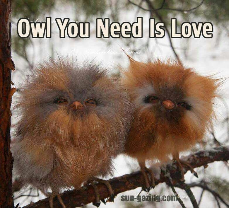 I love these owls!! So freakin cute!!