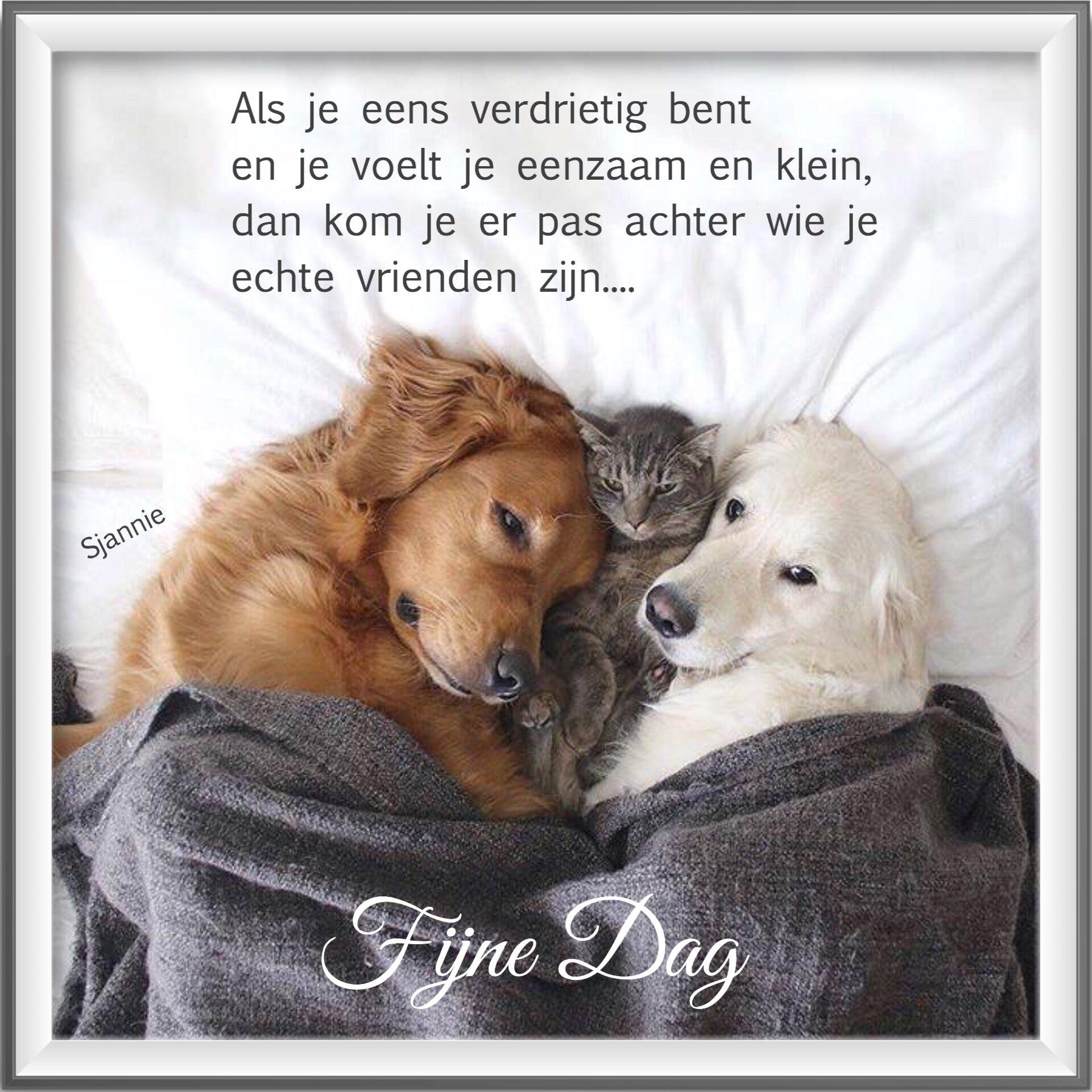 Citaten Over Honden : Pin van maureen de maeyer op gedichten over honden