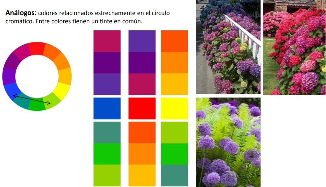Plantas De Colores