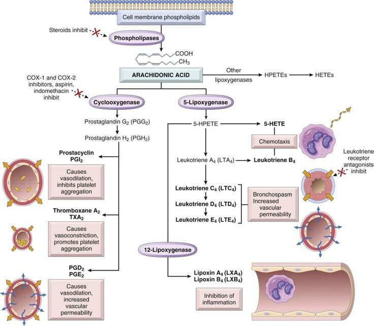Stem Academy Pre Nursing Pathway: Image Result For Arachidonic Acid Pathway Anti