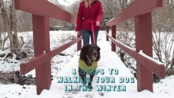 8 tips to stay protected during  winter dog walks — and the one thing you should always do when you get back home.