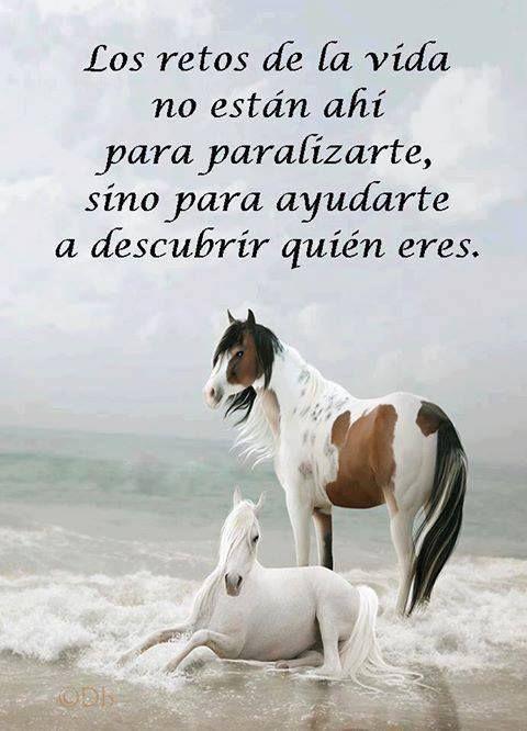 Imagenes Romanticas Para Enviar O Compartir Por Whatsapp Spanish Quotes Life Quotes Horses