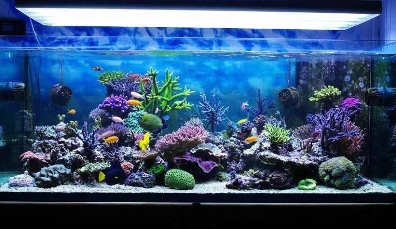How To Soften Aquarium Water Saltwater Aquarium Saltwater Tank Reef Aquarium