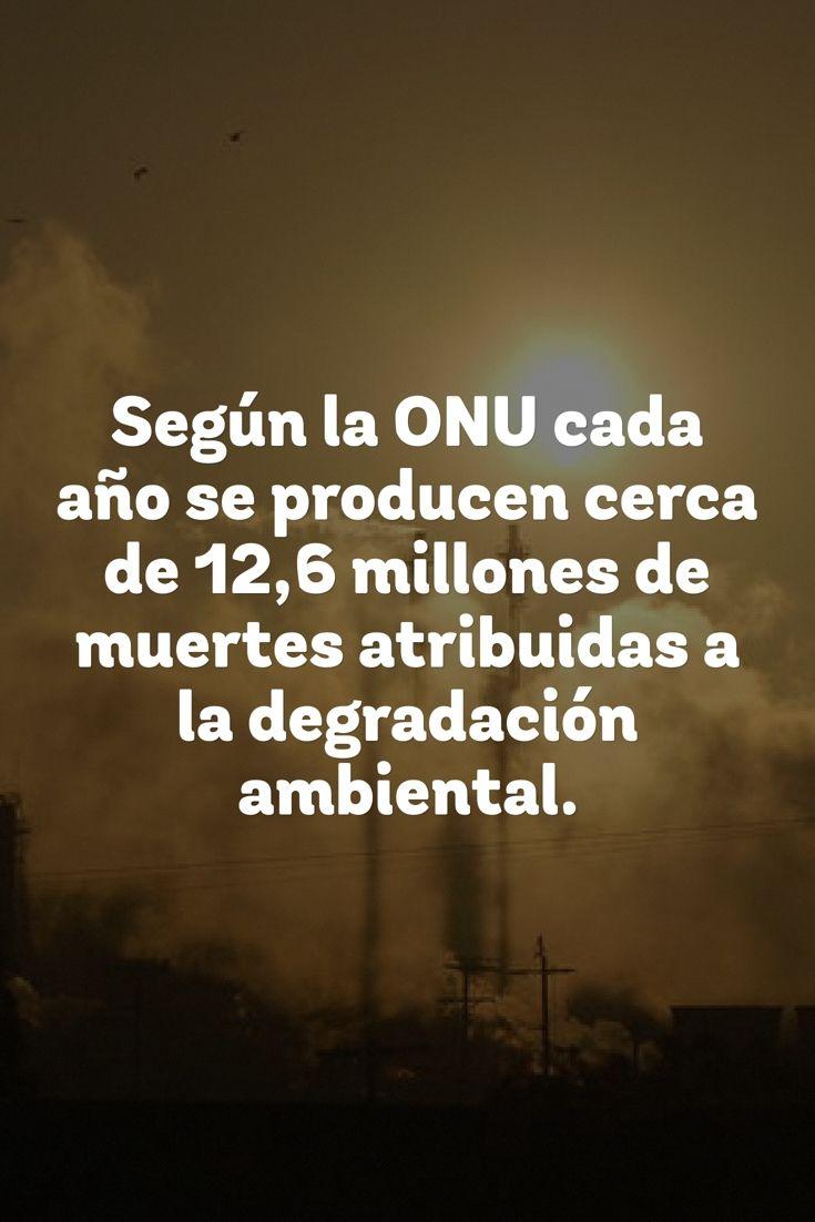 Pnuma alerta sobre muertes prematuras a causa de la degradación #ambiental: http://bit.ly/1WQxPT7