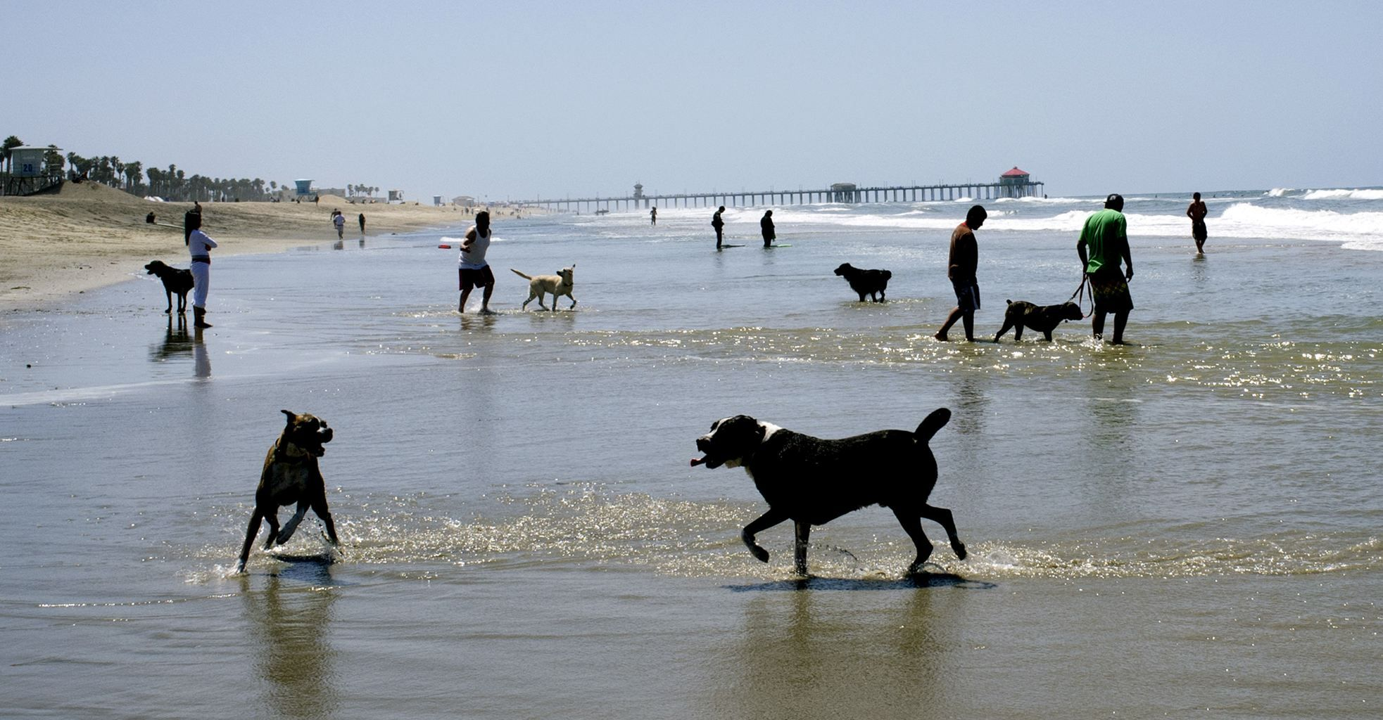 Lifes a beach for lucky dogs free to run on sand - Yahoo! News
