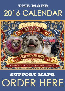 Mid Atlantic Pug Rescue Serving North Carolina South Carolina