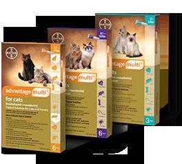 Advantage Multi For Cats Warrior Cats Books Cats Multi