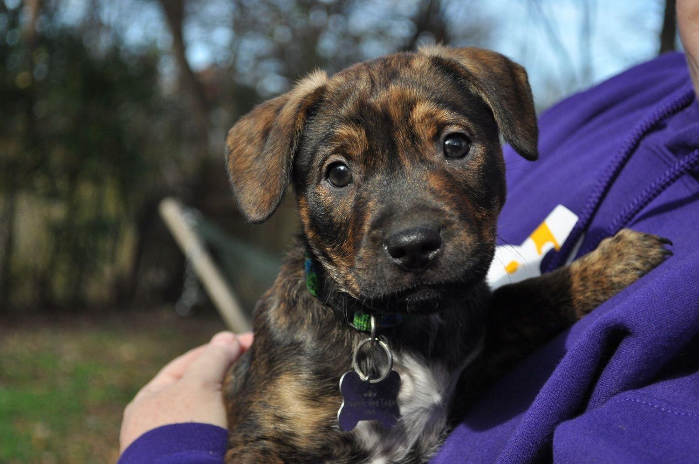 Pin de Linda McCormick em Adopt a shelter dogcat not buy!