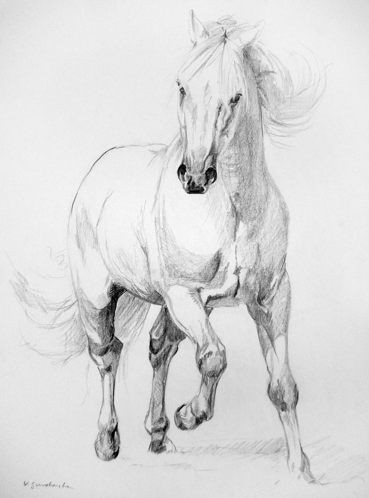 Pin By Agnes On Drawing Horse Art Drawing Animal Drawings Horse Drawings
