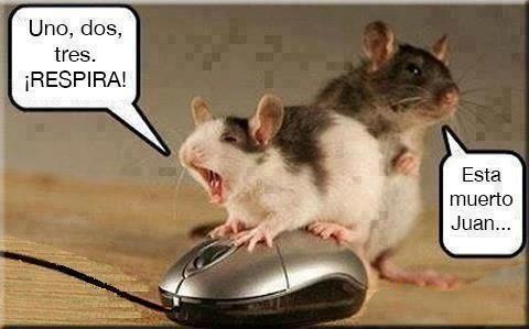 Ratones Chistes Graciosos Chiste En Espanol Gracioso