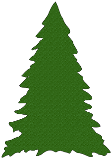 Pine Trees For Christmas