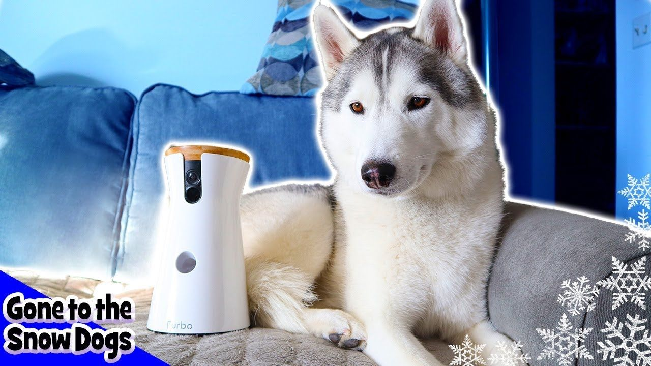 6 Best Dog Toys For Huskies 2020 Reviews Fun For Floofs Best
