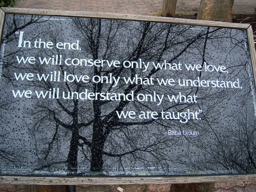 In The End We Will Conserve Only What We Love We Will Love Only What