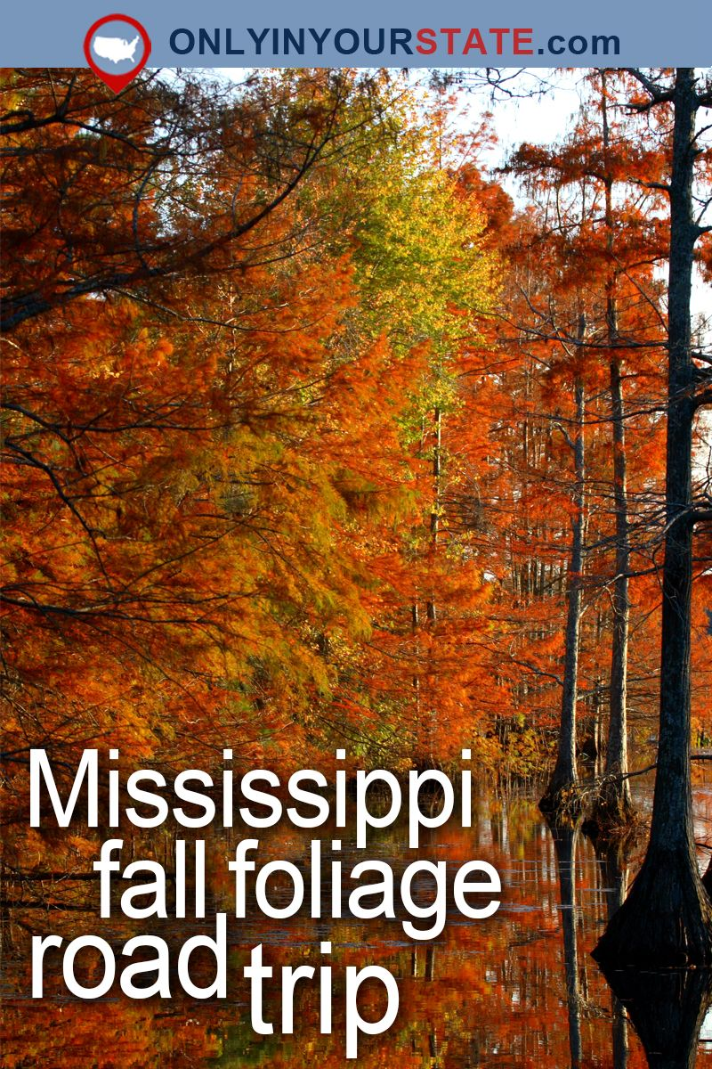 take this gorgeous fall foliage road trip to see mississippi like