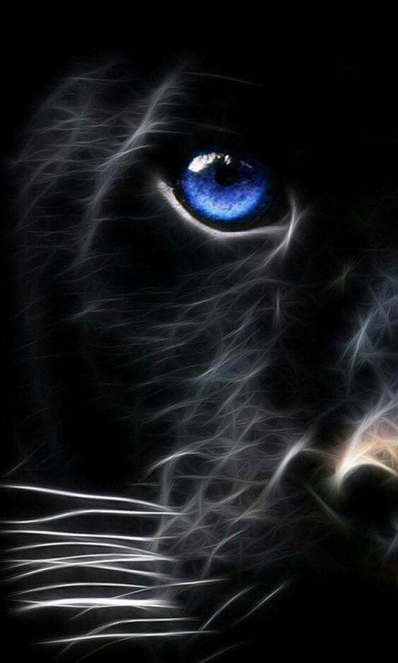 Pin by ghost on spirit animals pinterest cat animal and wildlife pics photos blue eyed panther a big cat mobile wallpaper picture voltagebd Images