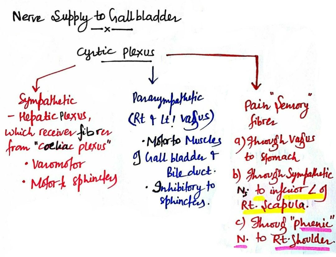 Nerve supply to Gall bladder ... ( Note: Parasympathetic - Motor to ...