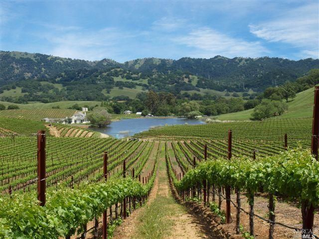 Grape-Vineyard, Napa, CA | Plants & Plant-based Products | Pinterest