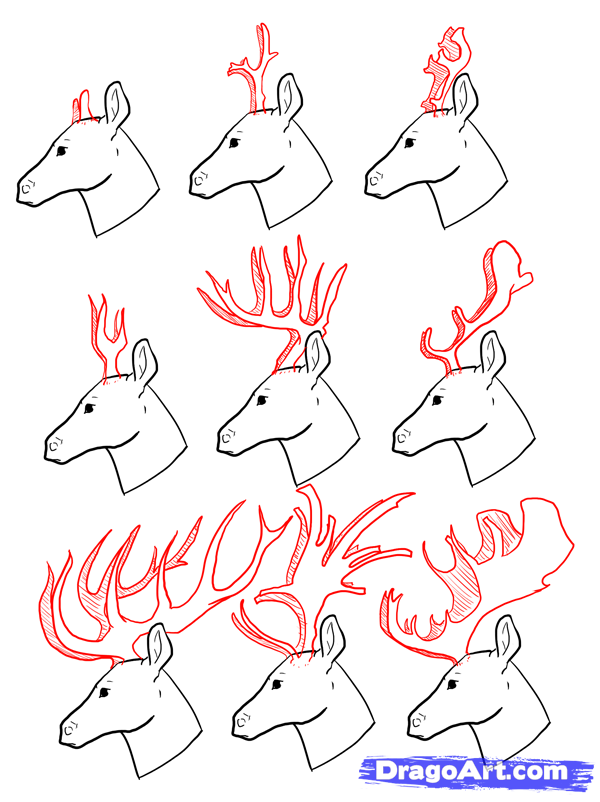 how to draw deer drawing deer step by step forest animals