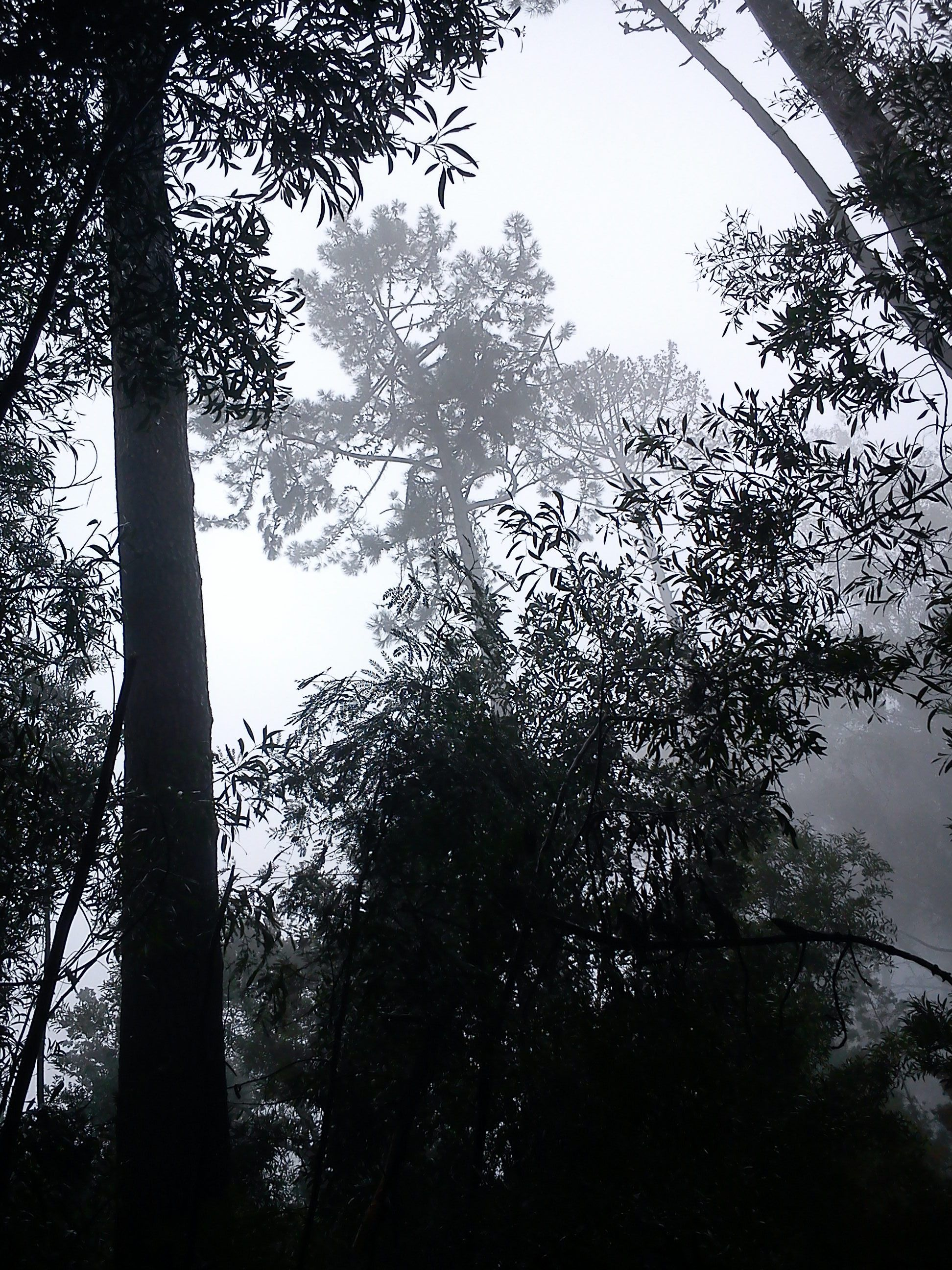 Mirando al cielo en el cerro Caracol