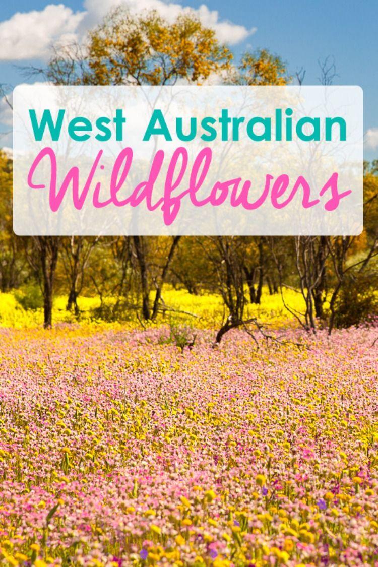 West Australian Wildflower Road Trip(画像あり) お花畑, 花畑, 植物