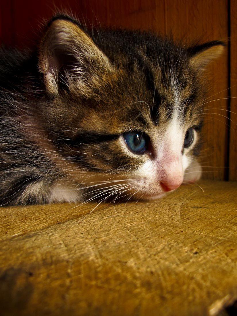 A cute little kitten I met along the way...