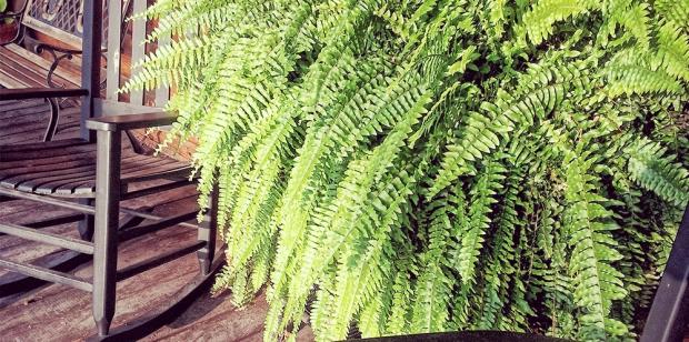 5 plantas para el cuarto de baño | Plantas, Casas de playa ...