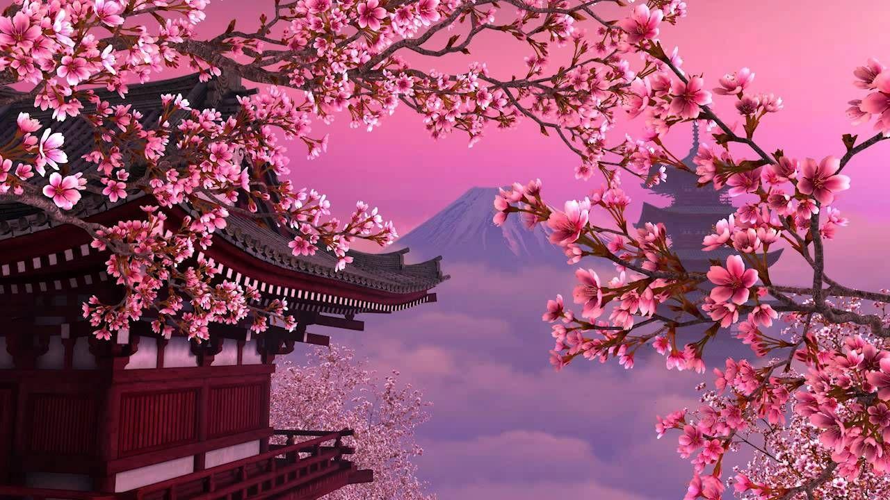 Maxresdefault Jpg 1280 720 Fleur De Cerisier Cerisier Japonais Japon