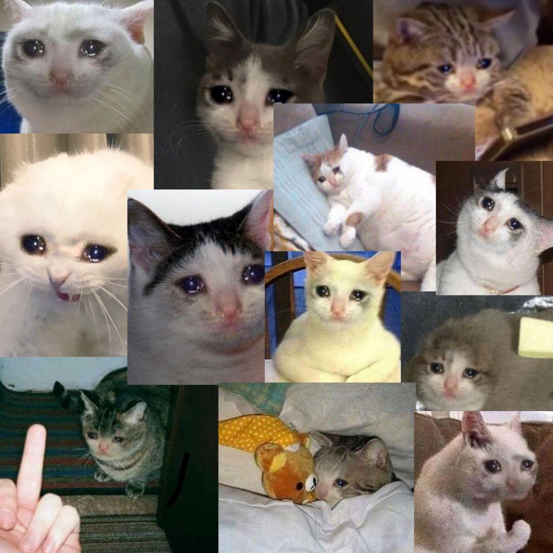 Top 29 Crying Cat Memes Cat memes, Cats, Memes