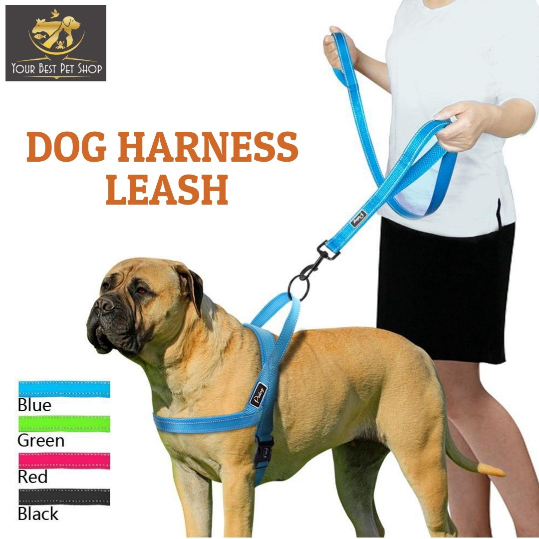 Want To Keep Your Dog Strutting In Style With A Variety Of Charmed