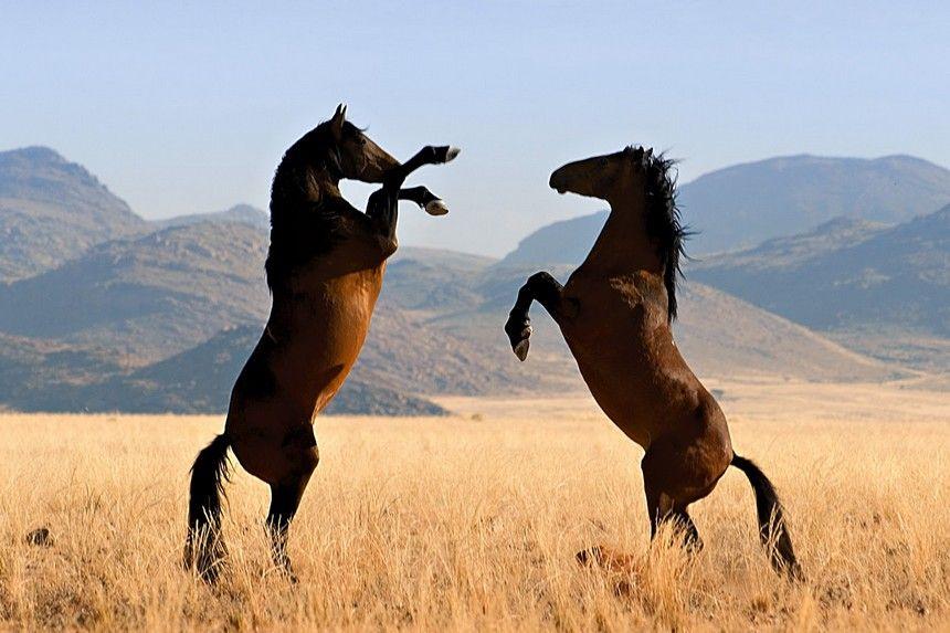 The 18 Breathtaking Photos Of Wild Horses Around The World