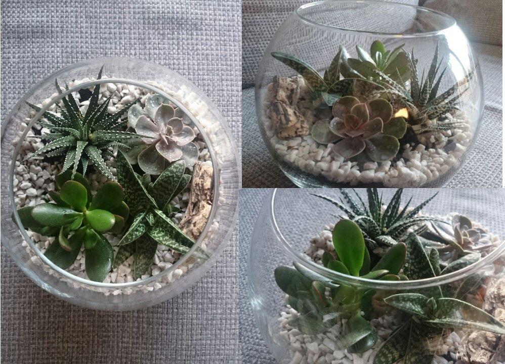 kakteen pflanzen goldfischglas wohnzimmer dekoideen kaktus im glas fischglas glas. Black Bedroom Furniture Sets. Home Design Ideas