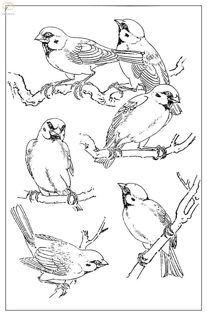 "Photo from album ""Воробьи"" on | Illustration Animals в ..."