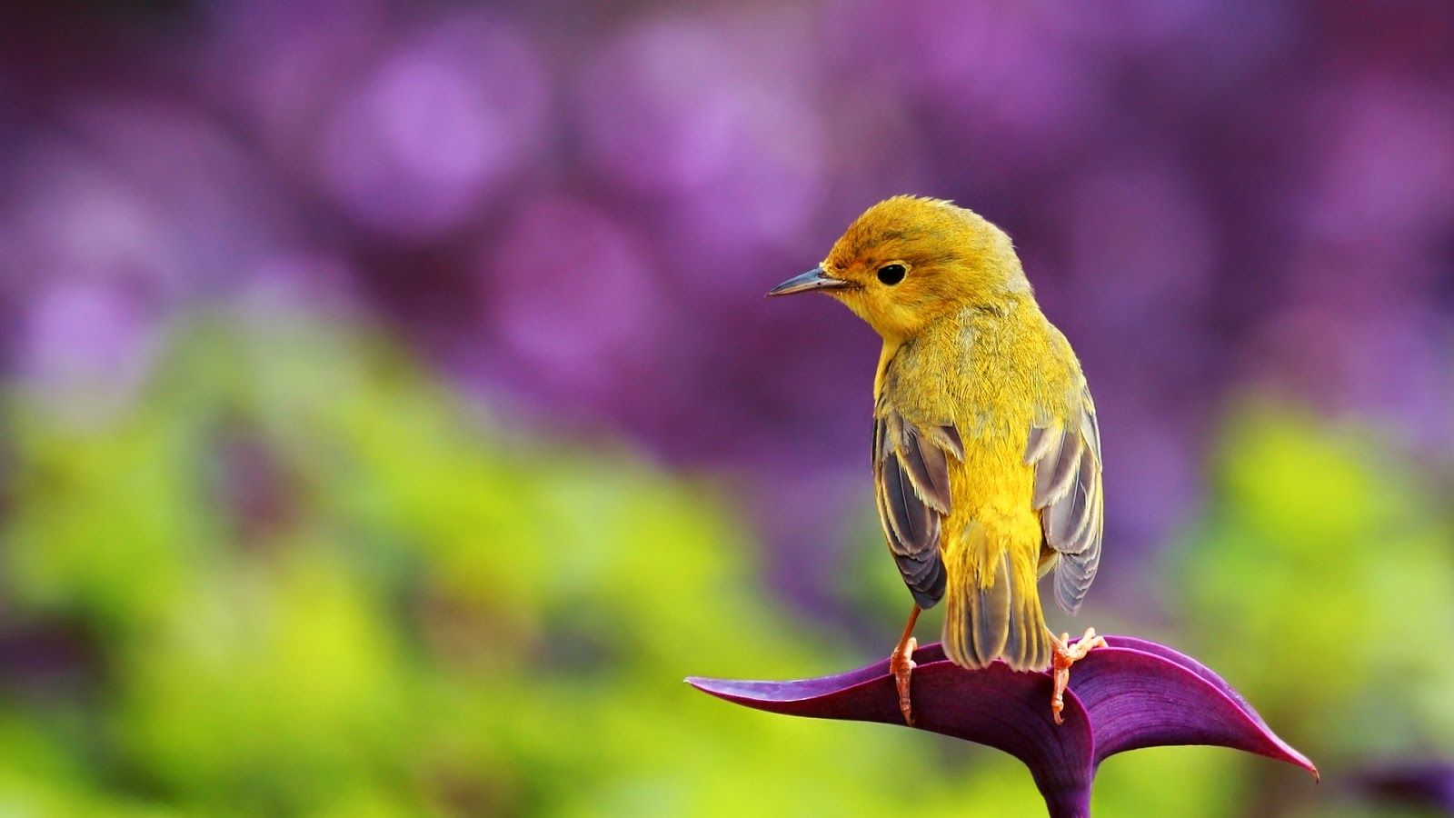 Beautiful HD wallpapers : Birds Wallpaper HD 1080P | All ...