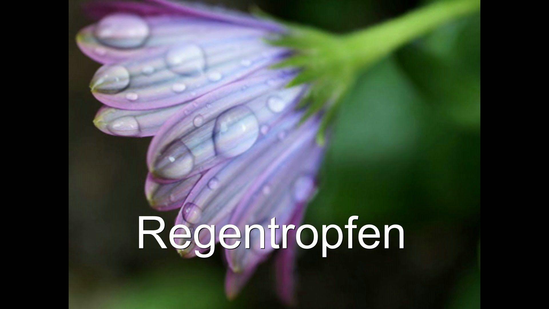 Regentropfen Fotoshow /RuthvonG