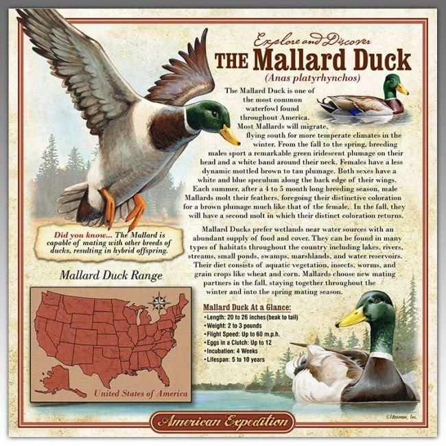 Mallard Duck 3-D Tin Wildlife Info Signs For $12.99