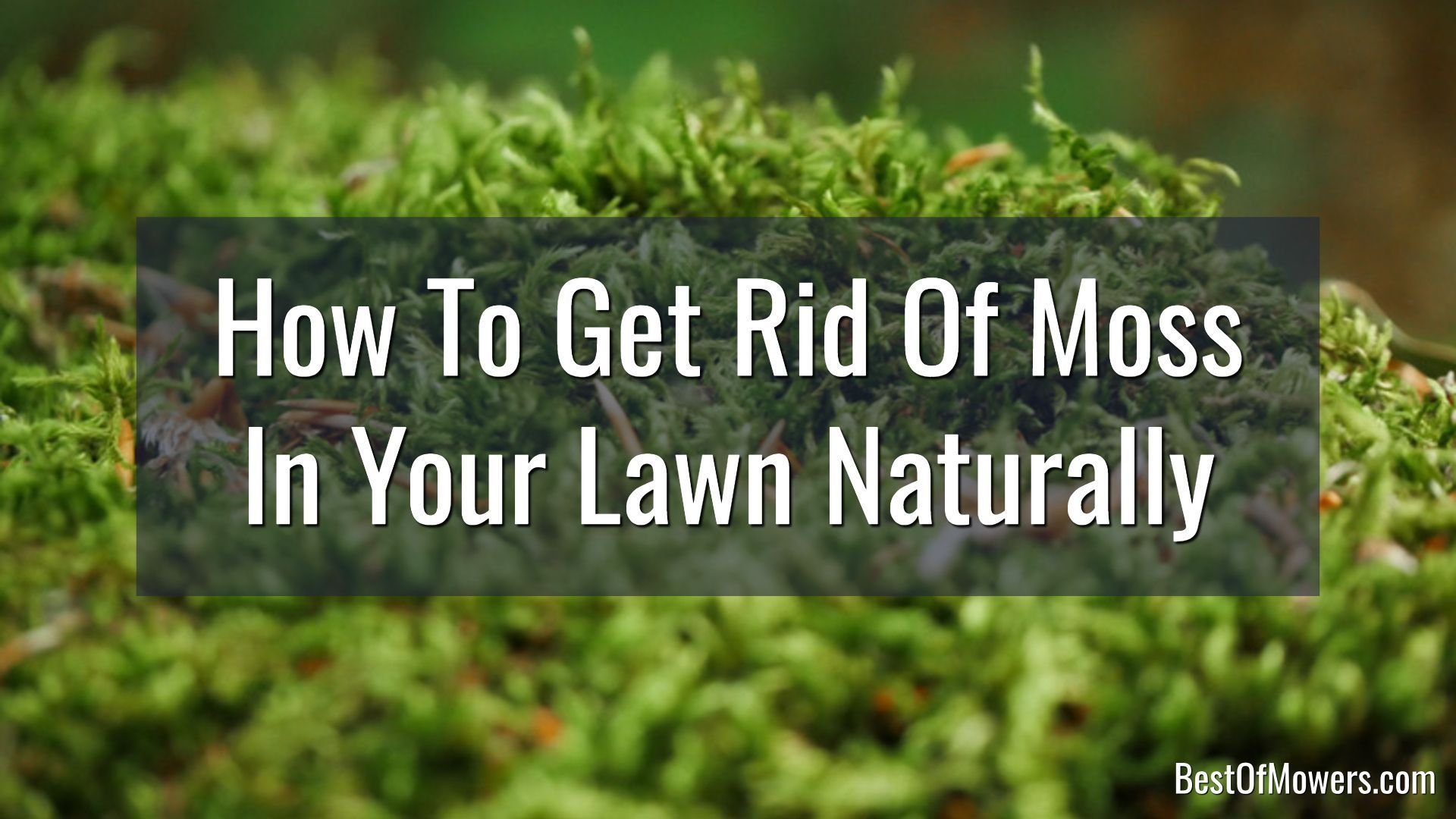 10a002bb3b00c34a6c565ccfcd96d1d0 - How To Get Rid Of Moss In Grass Naturally