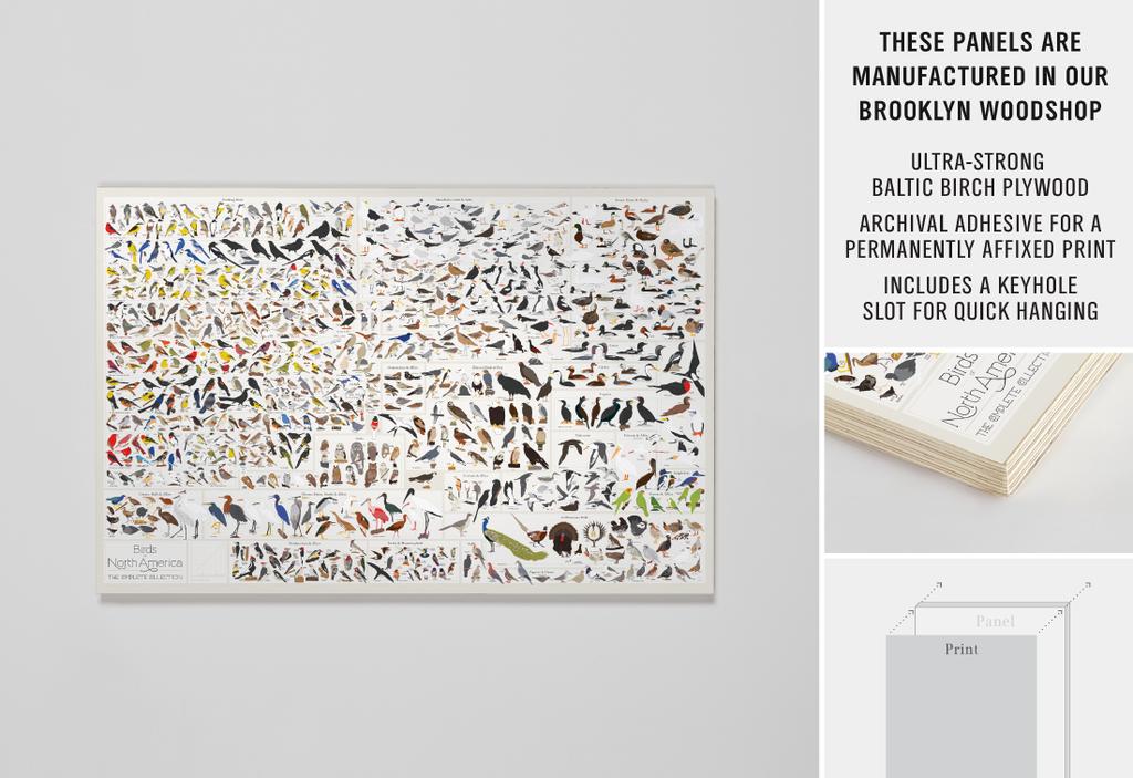 Pop Chart Lab Design Data Delight Birds Of North America