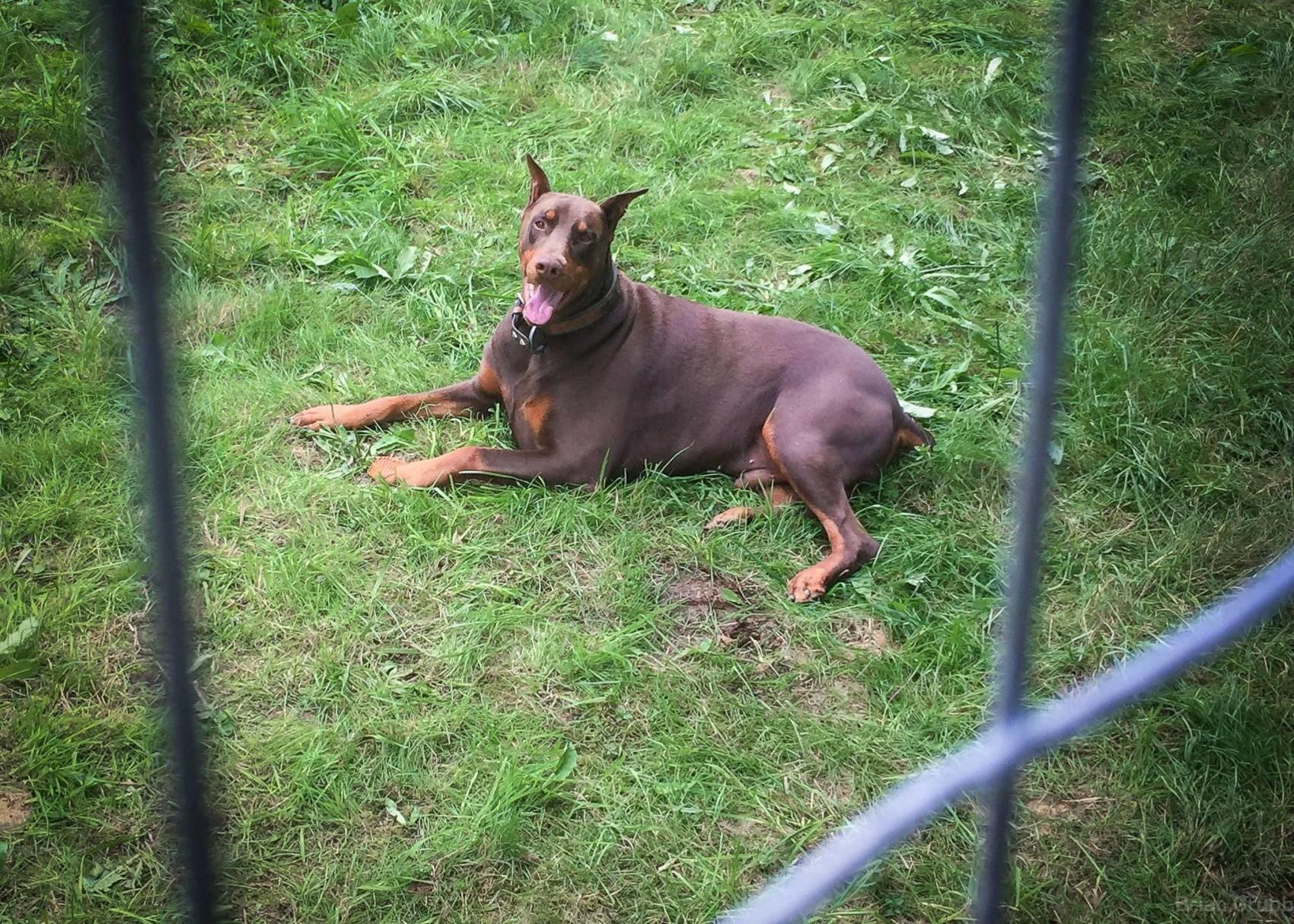 Craigslist Missoula Pets We provide veterinary medical and surgical services for dogs, cats, reptiles and birds. how to search all of craigslist