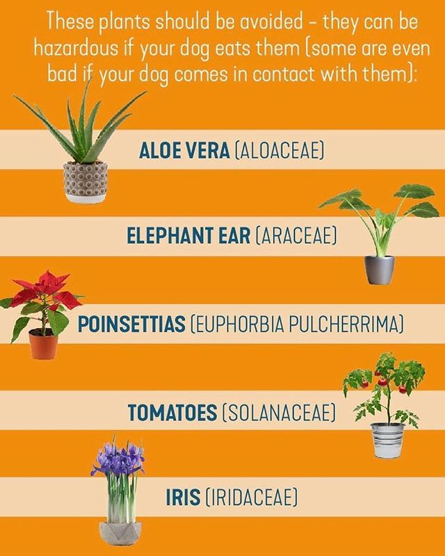 Here Are 5 Common Plants That Are Poisonous To Dogs