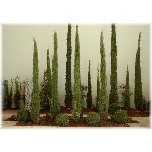 gartengestaltung zypresse Gartengestaltung, Kaktus