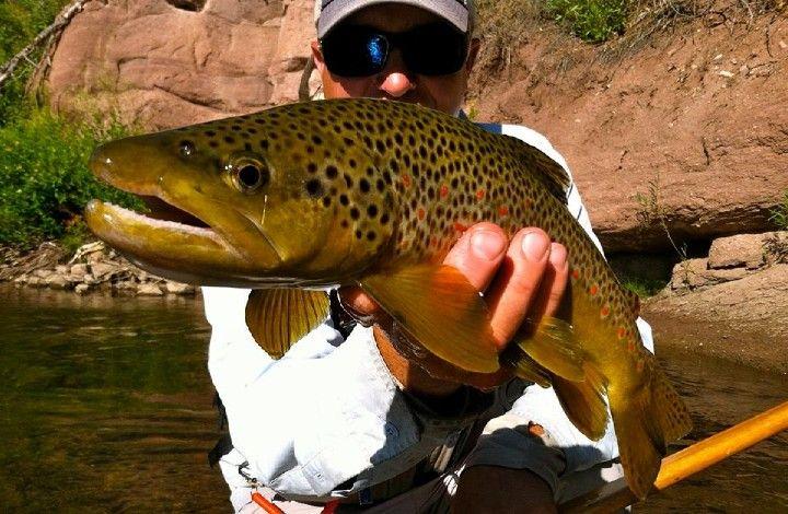 2016 Colorado Fly Fishing Forecast Fly Fishing Fly Fishing Colorado Fish