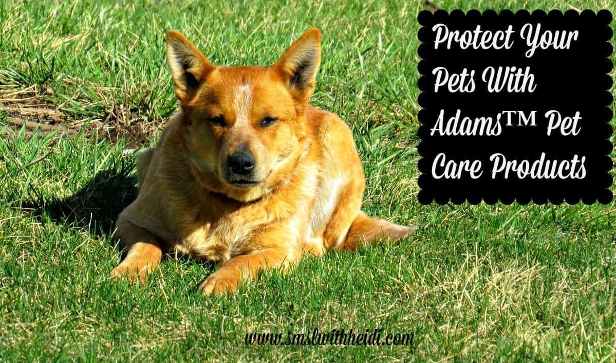 Adams™ Flea & Tick Control Products Make Protecting Pets a ...