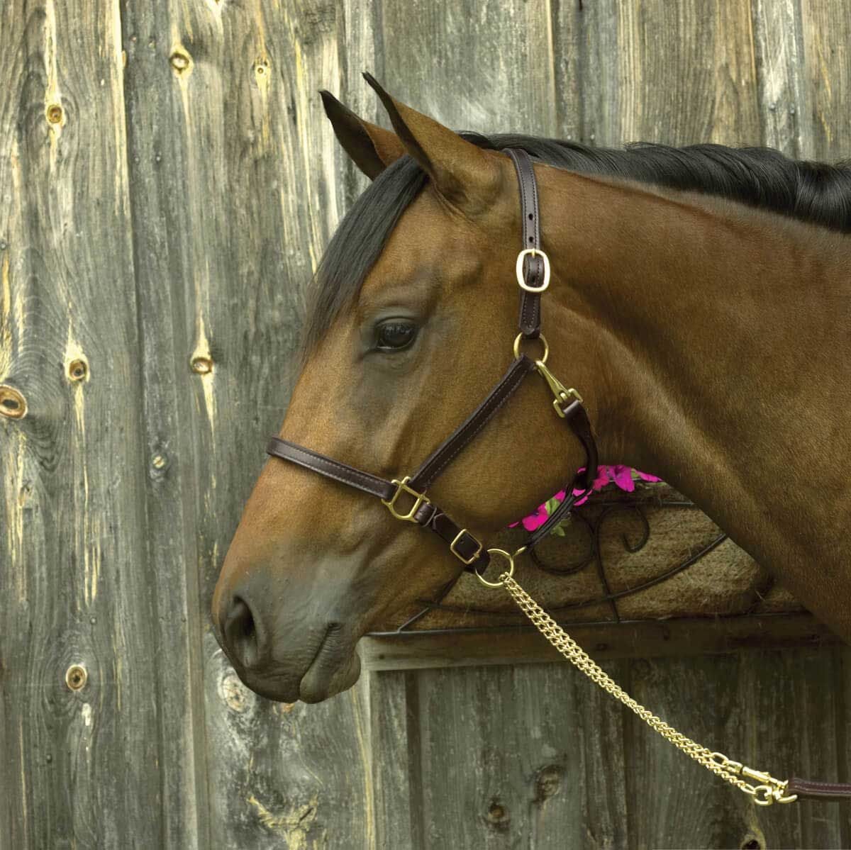 Havana Brown Perris Padded Leather Halter Pony Havana//Brown Padded Halter