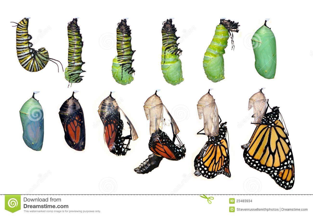 el santuario de la mariposa monarca es un ecosistema natural ...