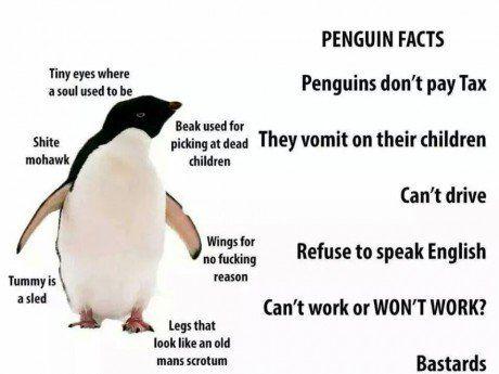 Damn Penguins