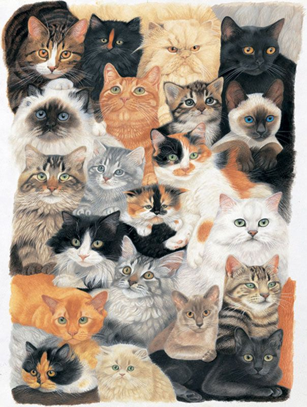 Cat Collage | Kenna Bean | Cats, Raining cats, dogs, Dog cat
